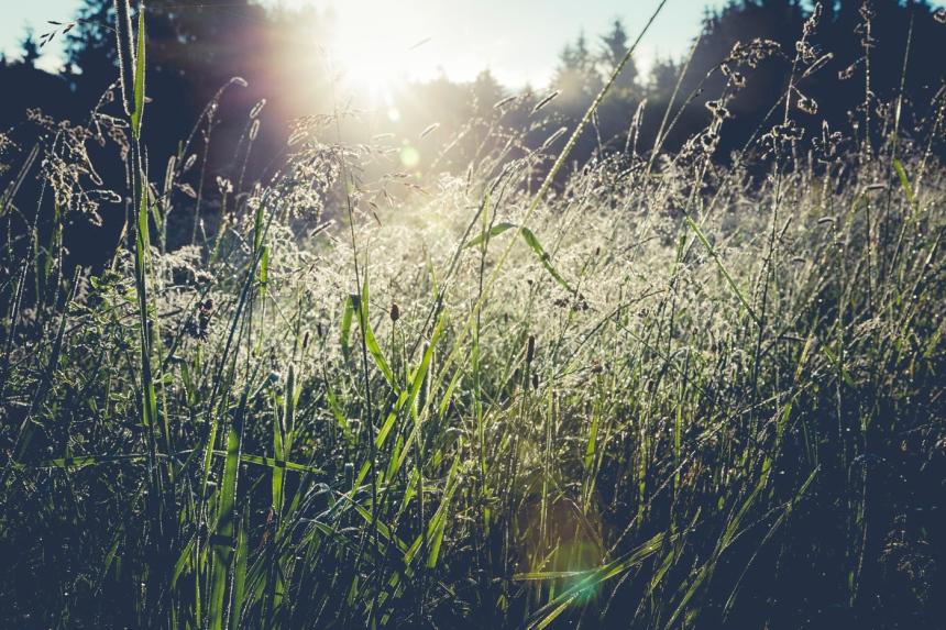 Genieten van zon in de natuur