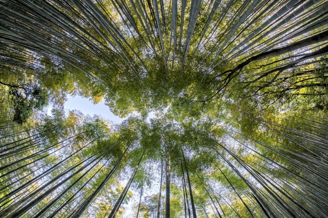 Opruimen Minimaliseren #MinsGame Ontspullen Natuur Zen