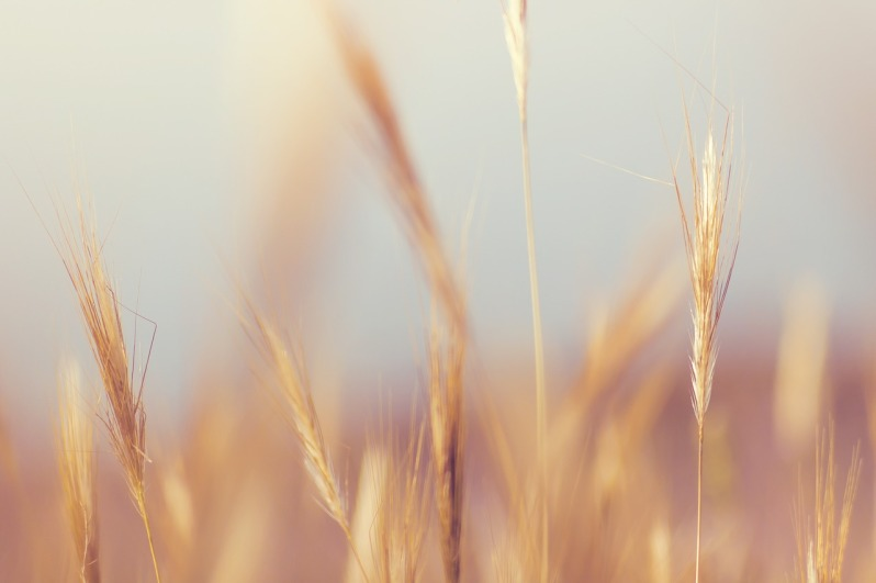 Minimalisme_Grass_Mindful