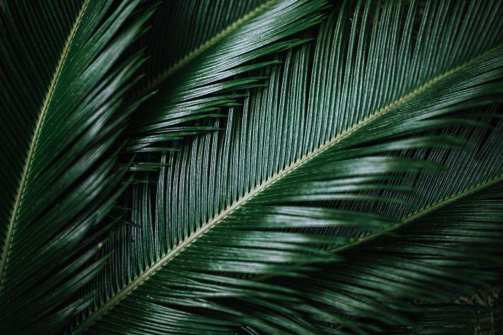 Mijn Ervaringen met… Kokosolie alsdag/nachtcrème