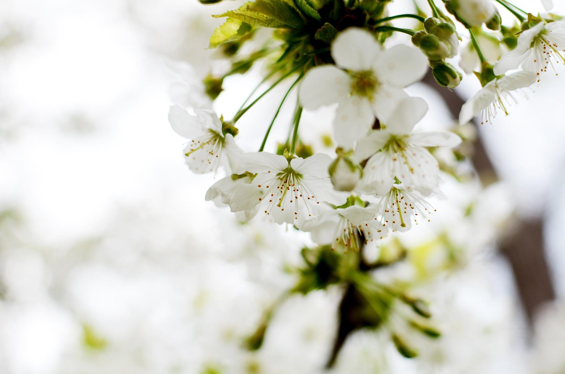Een minimalistische lente sfeer u minimalist dutchie